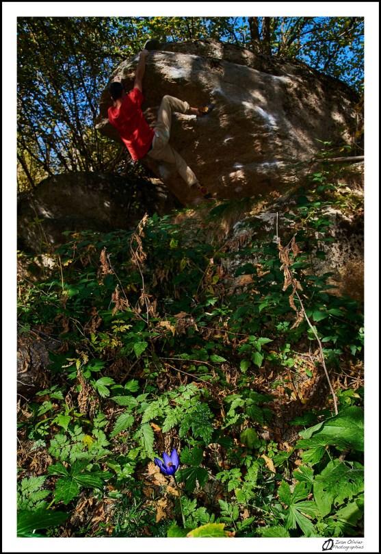 GC-colchicum autumnale-targasonne