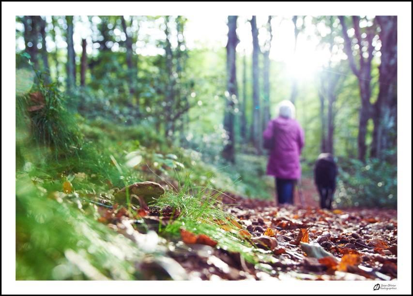 GC-petit bonheur 5-balade automnale en foret champignon et lumière - ivan olivier photographies