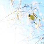 Petit bonheur #6 – Spring is coming
