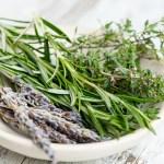 Cueillette au pied des voies – Thym commun – Thymus vulgaris