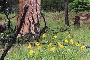 Tree-flowers300