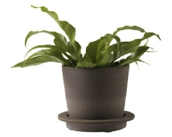 4 ikea potted plants