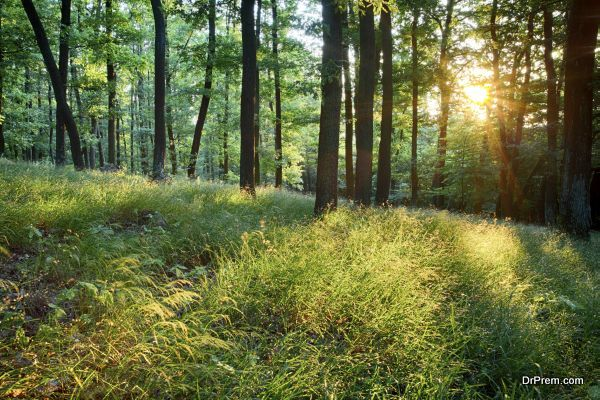 Green forest with sun and rays