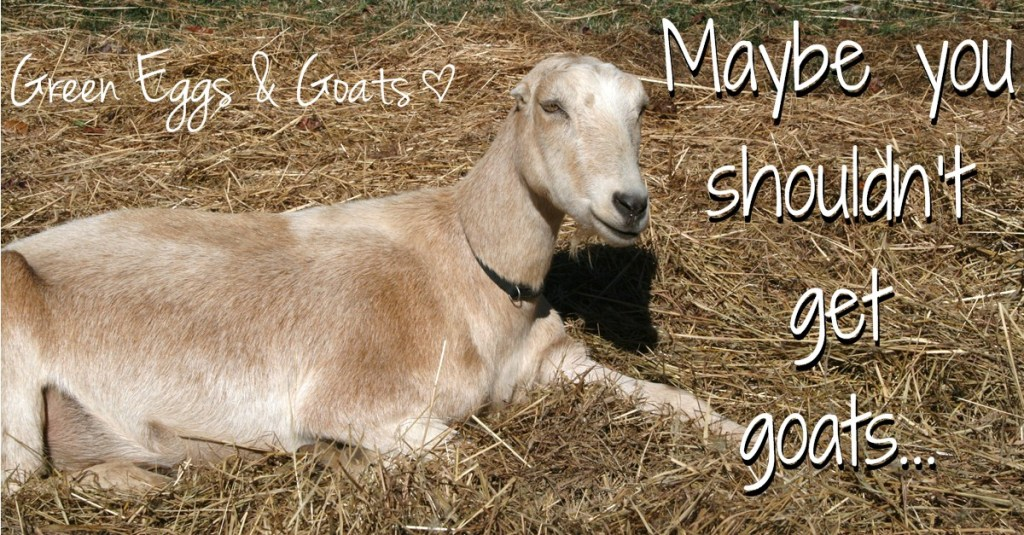 Maybe you shouldn't get goats