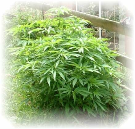 fullgrown2