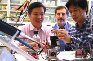 Methanobacterium palustre logan 300x198 Methane Producing Microbes as New Source of Renewable Energy