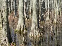images3 Methane Released from Wetlands Trees Contribute to Climate Change