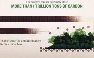 Deforestation is actually quite astonishing!