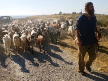 Samson Organic Farm – Under Threat?