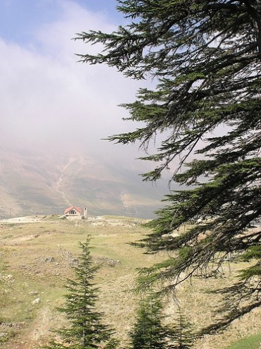 Cedars of Lebanon Threatened By Climate Change