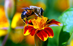 Israeli Company Beeologics Discovers Cure for Bee Colony Collapse-Associated Virus