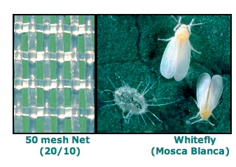 VIDEO: Meteor's Netting Keeps the Bugs from Bugging Your Crops