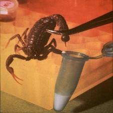 A Deadly Scorpion Provides a Safe Pesticide