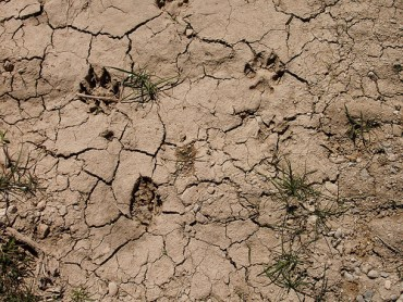 Solar Energy Developers Find Themselves in Green Versus Green Debate Over Coyote Land
