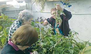 Organic Garden at Neveh Amit Retirement Home Keeps Centenarians and the Environment Healthy