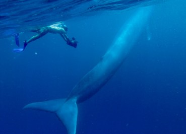 Iron-Rich Whale Poop Essential in Middle Eastern Marine Habitats