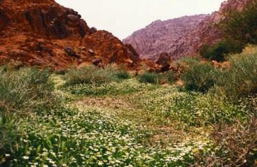 Saudi Arabia to Build Musma Park – The Mideast's Largest Environmental Tourism Park
