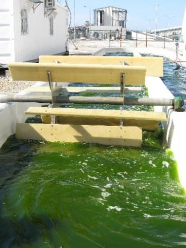 "Algae Into Biofuel a ""Greener"" Story In $10 Million Joint Israeli and Chinese Project"