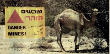 Green Prophet of the Week: Avi Kuzi Is Israel's Animal Guardian Angel