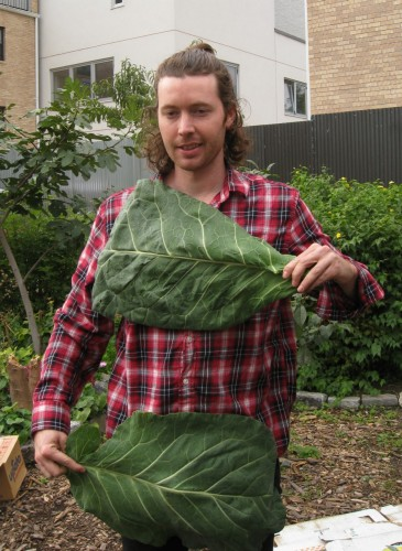 Hearty Roots Puts the Community in CSAs
