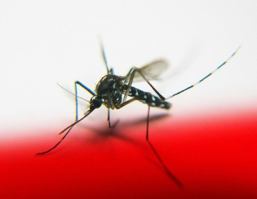 Using A Mosquito's Best Defense Against It