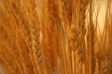 We Are All Connected: Heat Wave In Russia Affects Egypt's Wheat Supply