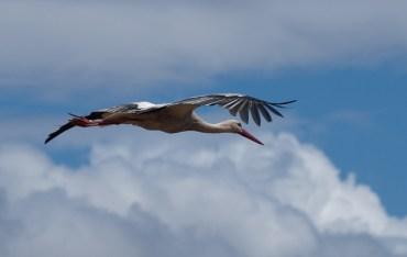 Israeli Air Force Fighter Pilots Dodge Migrating Storks