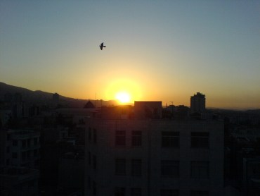 Birds in Iran Migrate Between Polluted to Less-polluted Cities