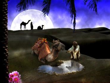 Israel Shares Strategies For Taking Back The Desert Oasis November 8-11, 2010