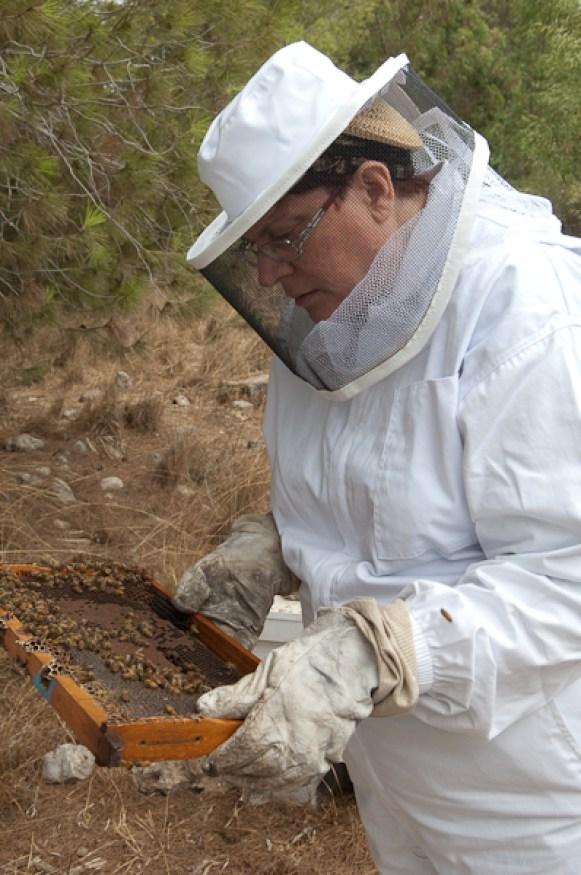 image-bee-frame apiary israel