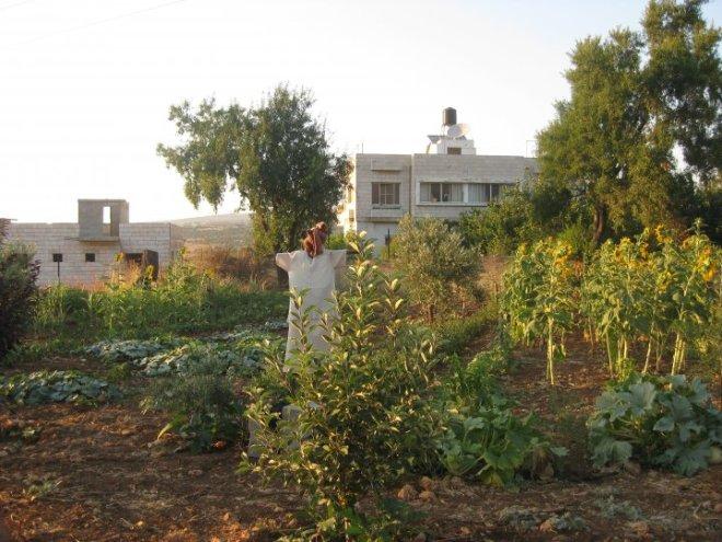 Murad Alkhufash marda permaculture palestine