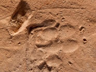 Ancient Paw Print Found Near Roman Bath in Jerusalem