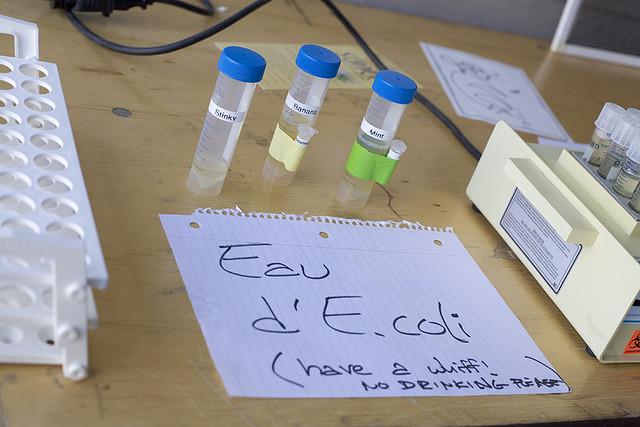 Arugula Samples In Dubai More Contaminated Than A Toilet