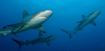 Shark Attacks Up 25% Worldwide