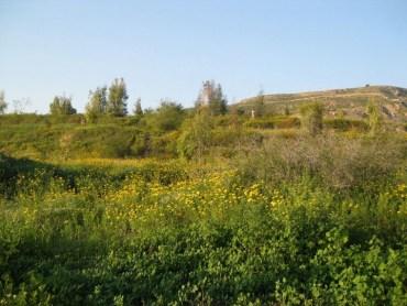 New Eco-Park Opens In Jordan