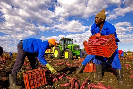 "CEO Of Organic Foods Company In Dubai Calls Local Farming ""Stupid"""