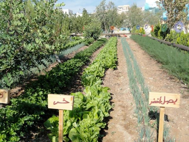 Garden of Auja