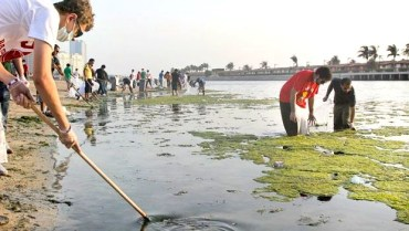 A Thousand Student Scouts Clean Jeddah Shores
