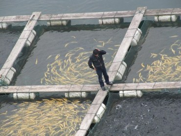 UN Says Aquaculture Could Solve Fish Collapse
