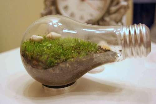 Light Bulb Terrarium and 5 New Uses For Old Light Bulbs