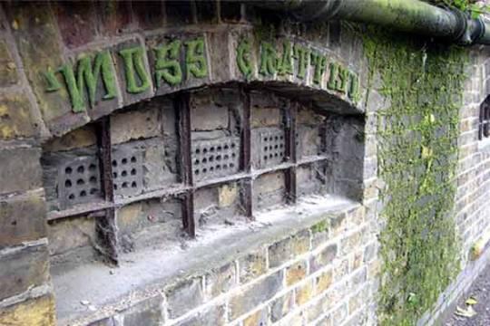 image-moss-grafitti