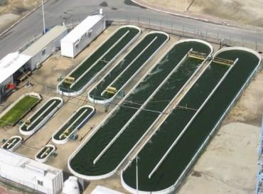 Algae Biofuel Closer as NATO and NASA Step Into the Slime
