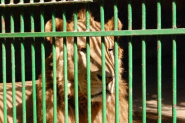 7 of the Saddest Wildlife Stories From the Middle East