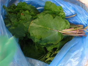 Jerusalem Sage and Nettles – January's Seasonal Produce