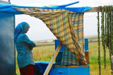 Balyolu: Turkey's First Honey Tasting Tour