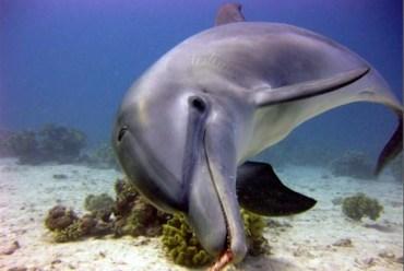 US Navy to Dispatch Mine-Detecting Dolphins to Strait of Hormuz?