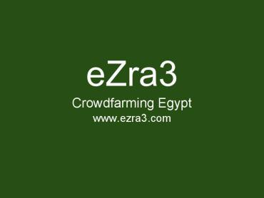 eZra3 Remote Farming in Egypt is Like FarmVille but Real