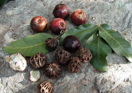 plum seed bank
