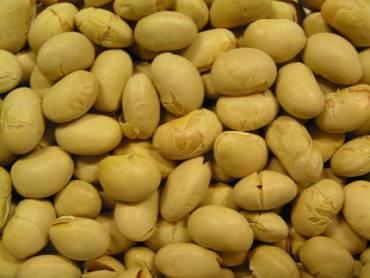 Genetically Modified Food in Israel, Lots of It