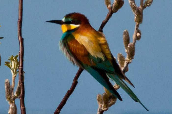 Banded Israeli Bird Suspected of Espionage in Turkey